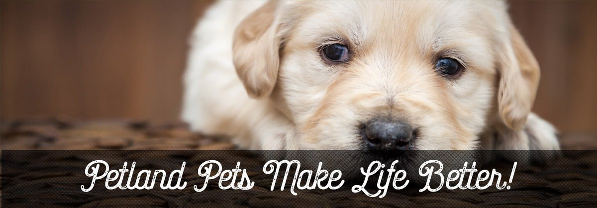 petland cares Petland Sarasota Pet Store Puppies for sale, Dog Breeds Info