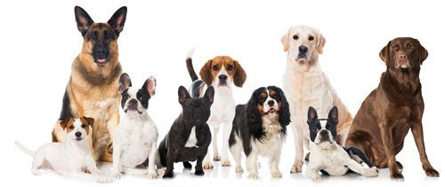 Best Dog Food For Multiple Dogs