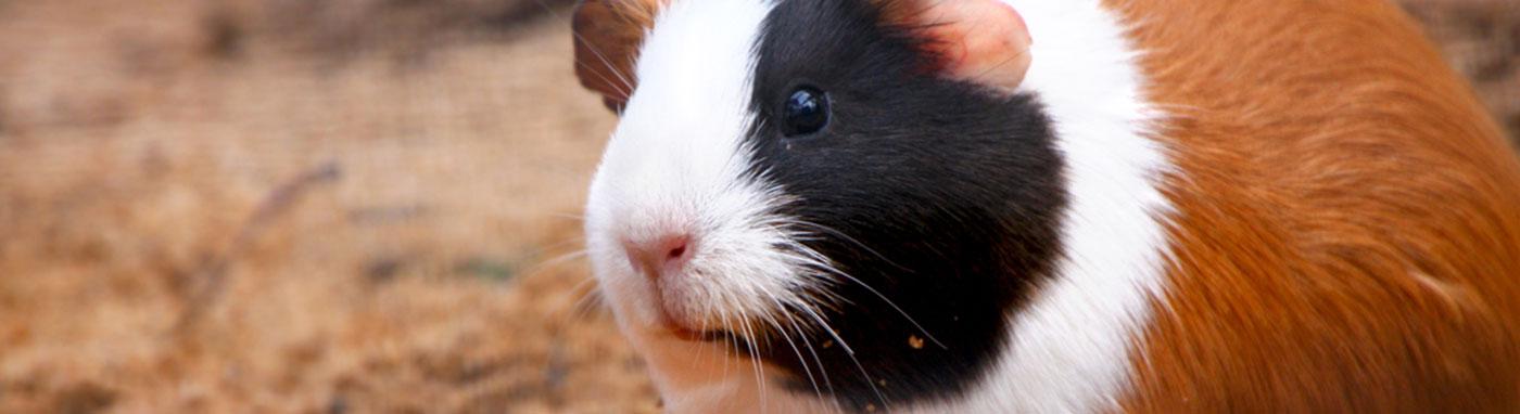 buy small animals in Sarasota, FL