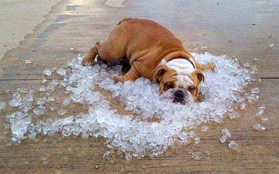 6 Tips for Keeping Your Dog Cool in The Summer