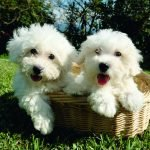 cute dogs for sale